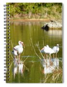 Ibis Pool Party Spiral Notebook