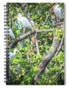 Ibises In A Tree Spiral Notebook