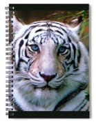 Ice Blue Eyes Of The Tiger Spiral Notebook