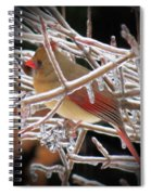 Ice Cage - Female Cardinal Spiral Notebook