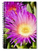 Ice Plant Blossom Spiral Notebook