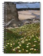 Ice Plants On Moss Beach Spiral Notebook