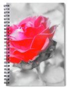 Iced Rose Spiral Notebook