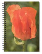 Icelandic Poppy 1124 Spiral Notebook