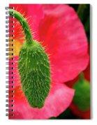 Icelandic Poppy Pod Spiral Notebook