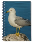 Idaho Sea Gull Spiral Notebook