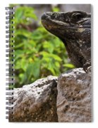 Iguana At Talum Ruins Mexico 2 Spiral Notebook