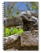 Iguana At Talum Ruins Mexico Spiral Notebook