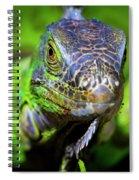 Iguana Stare Spiral Notebook