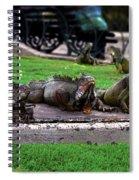 Iguana Trio Spiral Notebook