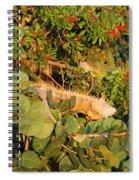 Iguanas Spiral Notebook