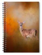 Illuminated By The Autumn Light Spiral Notebook