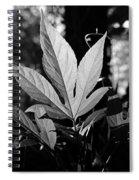 Illuminated Leaf, Black And White Spiral Notebook
