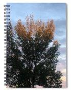 Illuminated Tree Top Spiral Notebook
