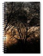Illuminating Through Trees  Spiral Notebook