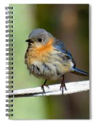 Illusive Female Bluebird Spiral Notebook