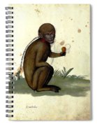 Illustration For A Book By Italian Scientist And Naturalist Ulisse Spiral Notebook