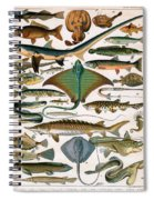 Illustration Of Ocean Fish Spiral Notebook