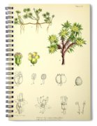 Illustrations Of The Flowering Plants And Ferns Of The Falkland Spiral Notebook