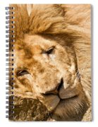 Im Sleeping Spiral Notebook