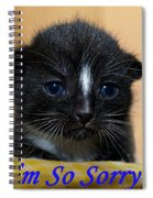 I'm So Sorry Greeting Card Spiral Notebook