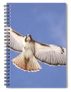 Img-0001 - Red-tailed Hawk Spiral Notebook