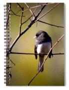 Img_0001 - Dark-eyed Junco - Snowbird Spiral Notebook