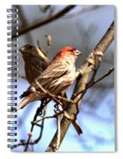 Img_0001 - House Finch Spiral Notebook