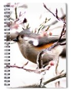 Img_0001 - Tufted Titmouse Spiral Notebook