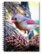 Img_0311 - Northern Cardinal Spiral Notebook
