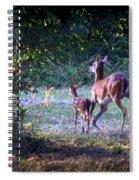 Img_0461-020 - White-tail Deer Spiral Notebook