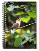 Img_0534-001 - Mourning Dove Spiral Notebook