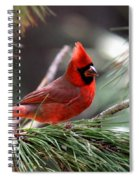 Img_0565-004 - Northern Cardinal Spiral Notebook