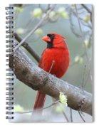 Img_0999-001 - Northern Cardinal Spiral Notebook