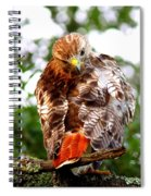 Img_1050-002 - Red-tailed Hawk Spiral Notebook