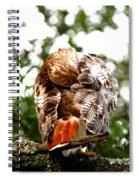 Img_1049-006 - Red-tailed Hawk Spiral Notebook
