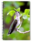 Img_1243-004 - Ruby-throated Hummingbird Spiral Notebook