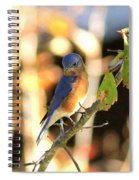 Img_145-005 - Eastern Bluebird Spiral Notebook