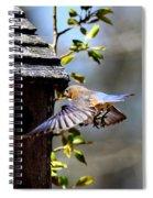 Img_1753-001 - Eastern Bluebird Spiral Notebook