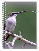 Img_1768-001 - Ruby-throated Hummingbird Spiral Notebook