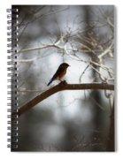 Img_2287 - Eastern Bluebird Spiral Notebook