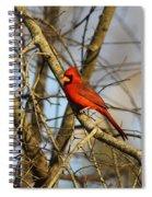 Img_2757-001 - Northern Cardinal Spiral Notebook