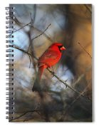 Img_2866-001 -  Northern Cardinal Spiral Notebook