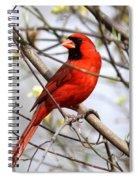 Img_2902-004 - Northern Cardinal Spiral Notebook