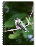 Img_3309 - Ruby-throated Hummingbird Spiral Notebook