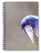 Img_4138-003 - Eastern Bluebird Spiral Notebook
