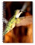 Img_4625 - Ruby-throated Hummingbird Spiral Notebook