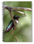 Img_5981-001 - Ruby-throated Hummingbird Spiral Notebook