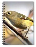 Img_5993 - Ruby-crowned Kinglet Spiral Notebook