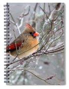 Img_6770 - Northern Cardinal Spiral Notebook